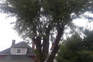 Photo #5: Mowing, Tree topping & Landscaping Services