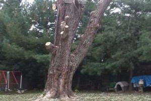 Photo #4: Mowing, Tree topping & Landscaping Services