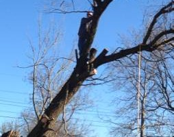 Photo #2: TREE WORK by Arbor Care Industry