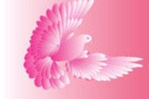 Photo #1: Pink Pigeo Cleaning Services - Sparkle and Shine