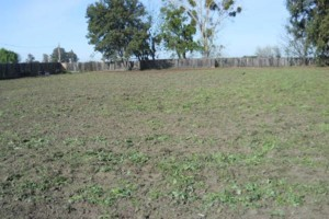 Photo #3: Tractor Work Lot Clearing, Discing/ Mowing/ Rototilling