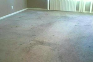 Photo #3: FRESH CARPET CLEANING & Windows CLEANING