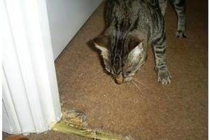 Photo #4: Carpet Repairs & Installation Services