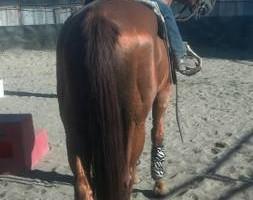 Photo #6: Animal Rescue of Lathrop Inc. Atranch Horse Boarding