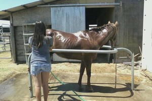 Photo #4: Animal Rescue of Lathrop Inc. Atranch Horse Boarding