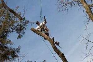 Photo #18: CHEAP!!! TREE REMOVAL SERVICE by certified arborist!