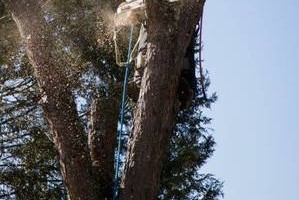 Photo #16: CHEAP!!! TREE REMOVAL SERVICE by certified arborist!