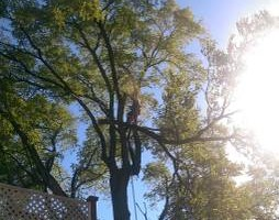 Photo #15: CHEAP!!! TREE REMOVAL SERVICE by certified arborist!
