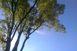 Photo #14: CHEAP!!! TREE REMOVAL SERVICE by certified arborist!