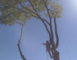 Photo #13: CHEAP!!! TREE REMOVAL SERVICE by certified arborist!