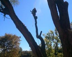 Photo #12: CHEAP!!! TREE REMOVAL SERVICE by certified arborist!
