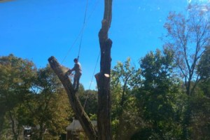 Photo #11: CHEAP!!! TREE REMOVAL SERVICE by certified arborist!