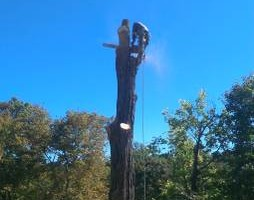 Photo #10: CHEAP!!! TREE REMOVAL SERVICE by certified arborist!