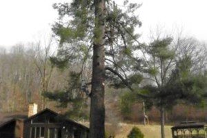 Photo #9: CHEAP!!! TREE REMOVAL SERVICE by certified arborist!