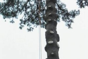 Photo #7: CHEAP!!! TREE REMOVAL SERVICE by certified arborist!