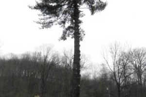 Photo #6: CHEAP!!! TREE REMOVAL SERVICE by certified arborist!
