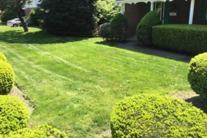 Photo #4: Scott and Sons Lawn Care