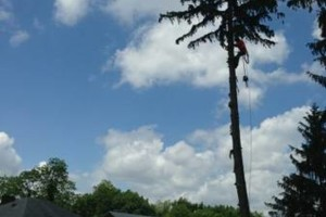Photo #7: TREE SERVICE - drone rescue 24/7 at an affordable price!