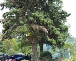 Photo #4: TREE SERVICE - drone rescue 24/7 at an affordable price!