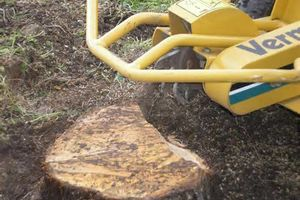 Photo #2: Stump grinding at affordable prices + removal of the grindings