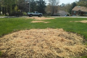 Photo #4: Bosetti Lawn Care/Aeration & Dethatching