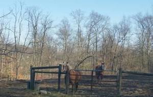 Photo #3: Royl Lane Stables. Horse Boarding - $300/month