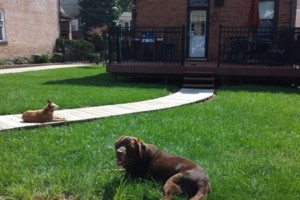Photo #1: Bow Wow Stay Now! Dog SITTER /DAY CARE...