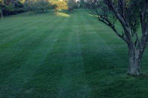 Photo #12: Briant's Lawn Care & Mulching