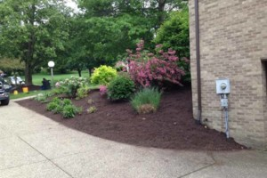 Photo #2: Paslow Lawn Service - Mulching, Landscaping. Licensed/Insured