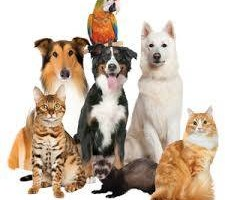 Photo #1: IRWIN PET NANNY - PET SITTER - Affordable-Reliable/Bonded &...