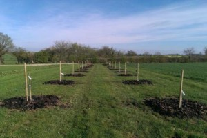 Photo #2: Professional Fruit tree Pruning & Spraying