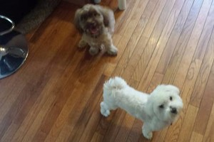 Photo #2: PET CONCIERGE. HOME BASED PROFESSIONAL DOG BOARDING & DAY CARE