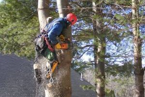 Photo #1: Keystone Timber Hardwoods. Tree trimming, removal, and firewood sales