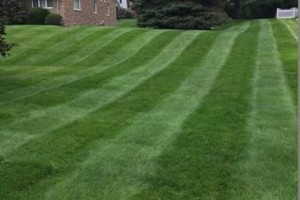 Photo #2: Purcell Lawn & Landscape, LLC. Grass Cutting, Lawn Maintenance, Mulching...