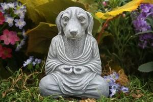 Photo #1: Karma Dog Training