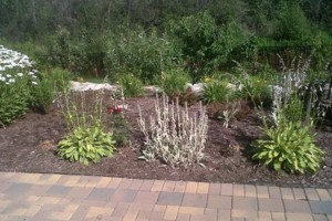 Photo #5: Pedro Quality landscape services
