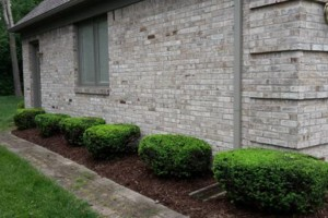 Photo #3: Pedro Quality landscape services
