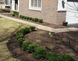 Photo #2: Pedro Quality landscape services