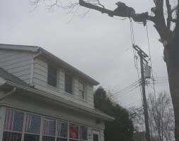 Photo #6: Chuck D's Tree trimming/removal
