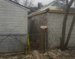 Photo #2: Chuck D's Tree trimming/removal