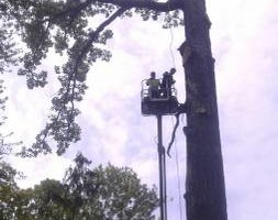 Photo #1: Chuck D's Tree trimming/removal