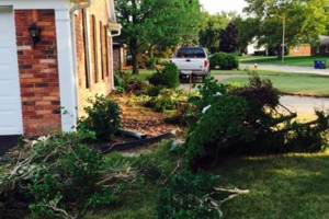 Photo #2: Tree and shrub removal/replacement