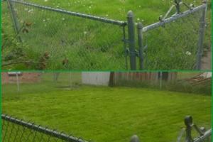 Photo #3: Reasonable lawn care. FREE on site estimate!
