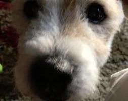 Photo #3: Pet Sitting/Dog Walking/In Home Dog Bathing/Pooper Scooper