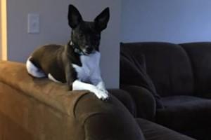 Photo #1: Pet Sitting/Dog Walking/In Home Dog Bathing/Pooper Scooper