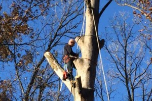 Photo #3: Fallen Timbers Complete Tree Care