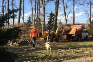 Photo #1: Fallen Timbers Complete Tree Care