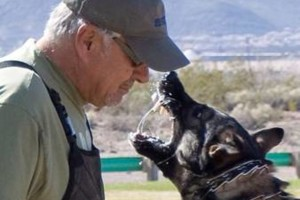 Photo #1: PROTECTION DOGS - The K9 Coach