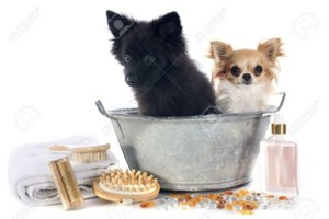Photo #1: Mobile Dog and Cat Grooming Service / Paws 'N Tubs