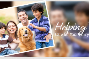 Photo #1: Country Creek Animal Hospital. Dog sitting & Grooming services